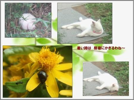 2006_0905hirune_1