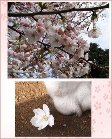 Sakura090403_2