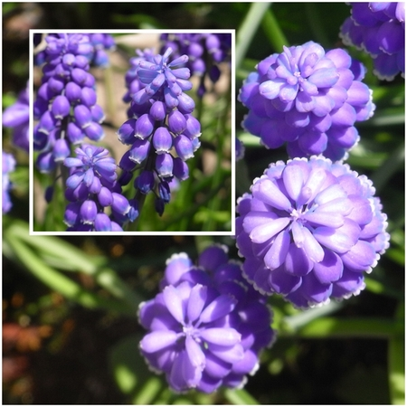 Spring_4