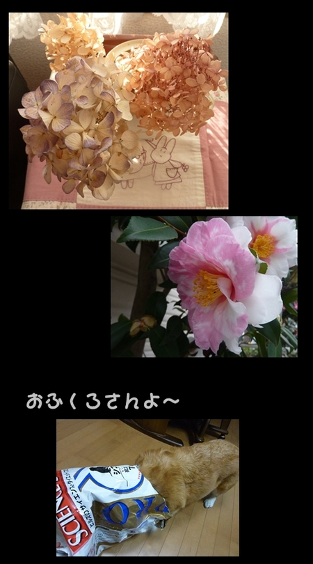 Azisai1230_2