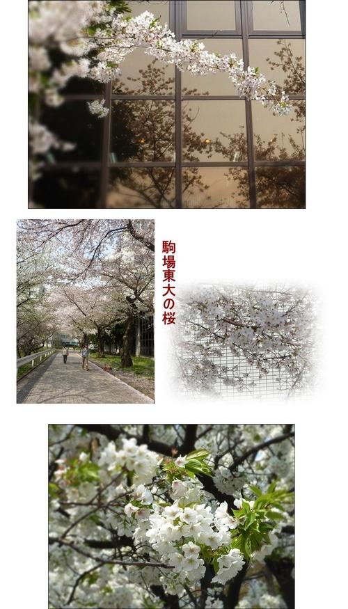 Toudainosakura_3