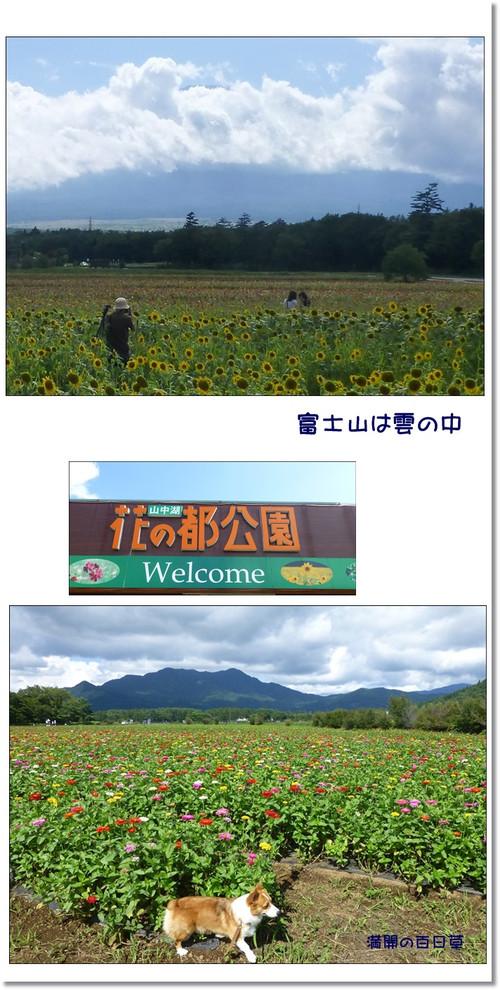 Yamanakakohana_3