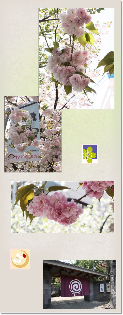 Sakurasinnmati