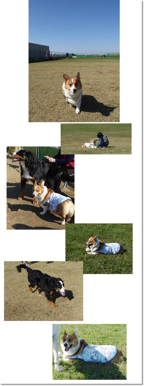 Dogg_2