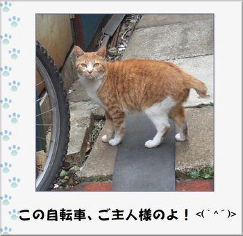 Neko3241_1